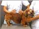 「愛犬の健康診断」を行います!!