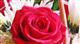愛妻の日(1/31)を前に花を贈ろう!エリアでお花と記念写真をプレゼント!